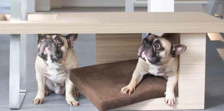 Des meubles pour... les animaux !