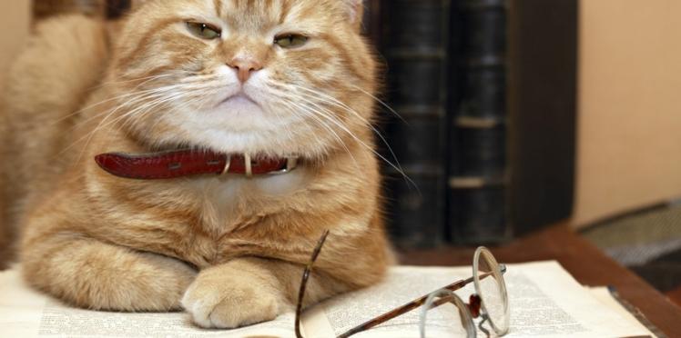 Mon chat est-il intelligent ?