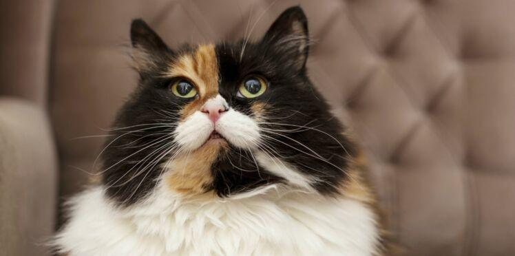 Mon chat vieillit : comment l'aider à rester en forme ?