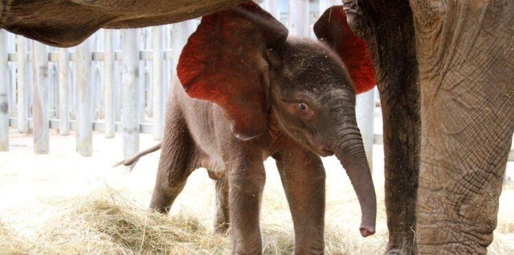 Zoo : les naissances de l'été en images