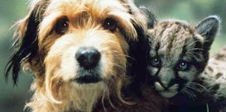 Noms de chiens : 2009, l'année du E