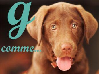 Noms de chiens : 2011, l'année du G