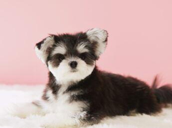 Noms de chiens : 2012, l'année du H