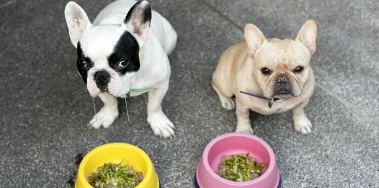 Nos conseils pour bien nourrir votre chien