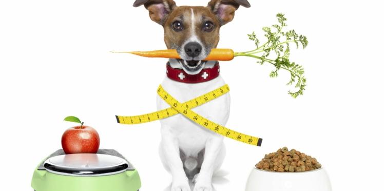 Obésité du chien et du chat, même combat !