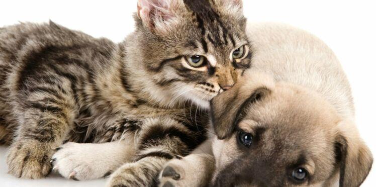Chien ou chat : nos conseils pour le bichonner après une opération