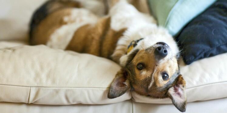 Quelle place pour mon chien à la maison ?