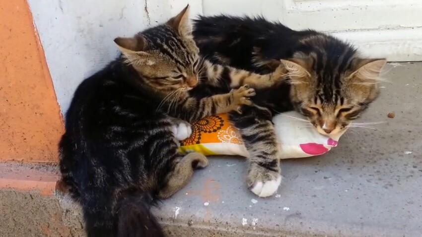 VIDÉO - Pourquoi les chats aiment-ils nous masser ?