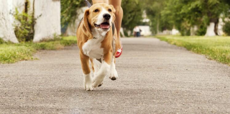 Comment déjouer les pièges de la promenade
