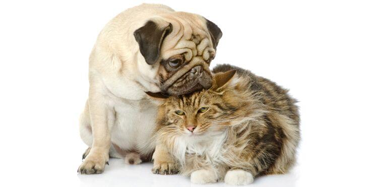 Rentrée : 5 conseils pour vos animaux de compagnie