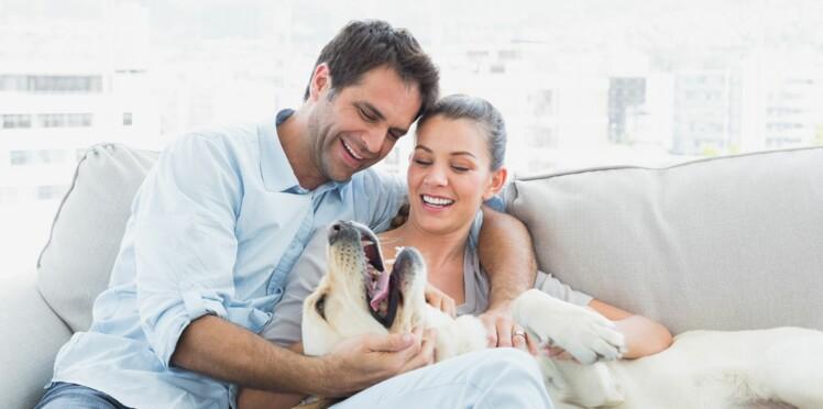 Chat, chien, comment réussir son adoption
