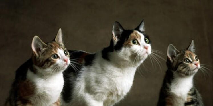 Revue de chats étranges