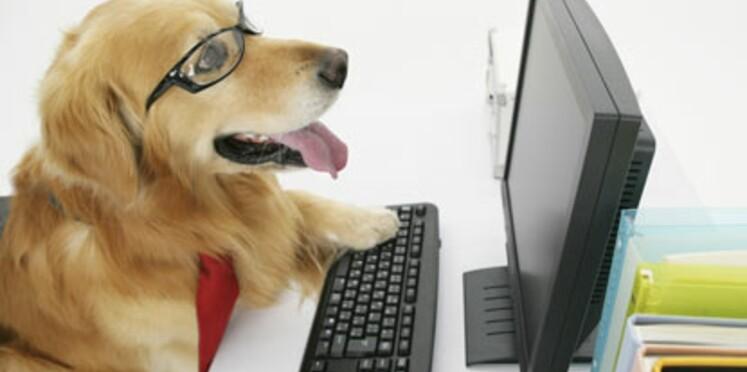 Des sites qui ont du chien