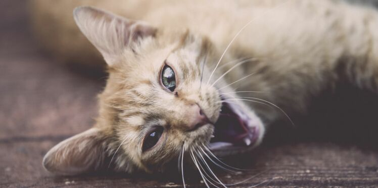 Mon chat stresse, je fais quoi ?