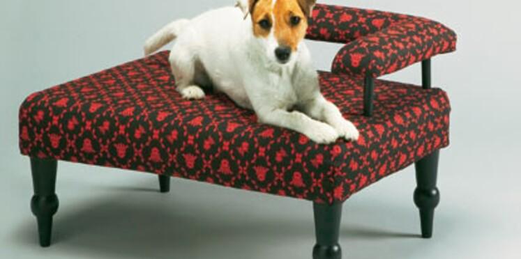 Sympa, la vie de chien !