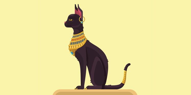 Légendes et belles photos de chats autour du monde