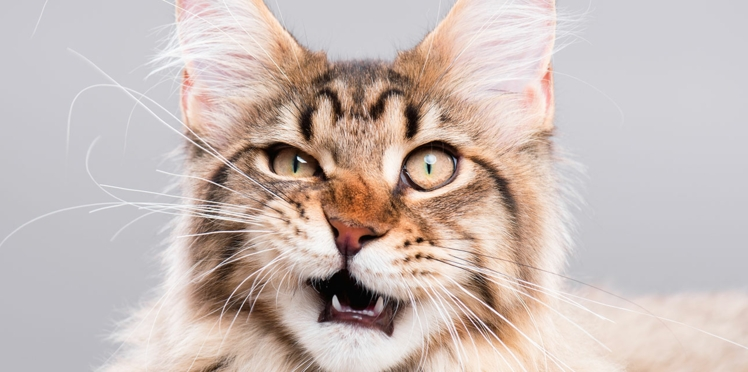 Tout ce que vous avez toujours voulu savoir sur les chats