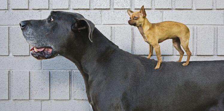 Tout savoir sur la création de races de chiens ou de chats