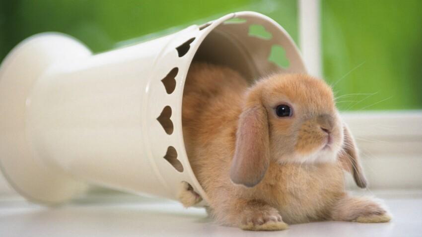 Trois raisons de craquer pour un lapin nain