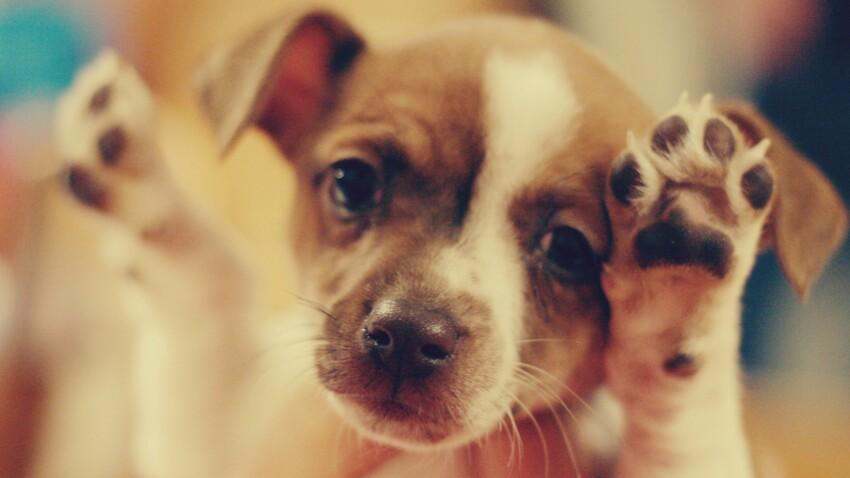 7 trucs faciles à apprendre à mon chien !