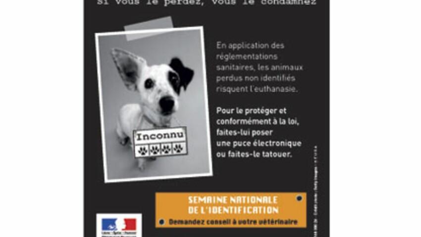 Une carte d'identité pour votre animal