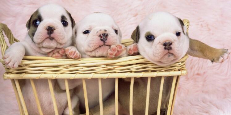Une portée de chiots ! Comment soigner les nouveaux-nés