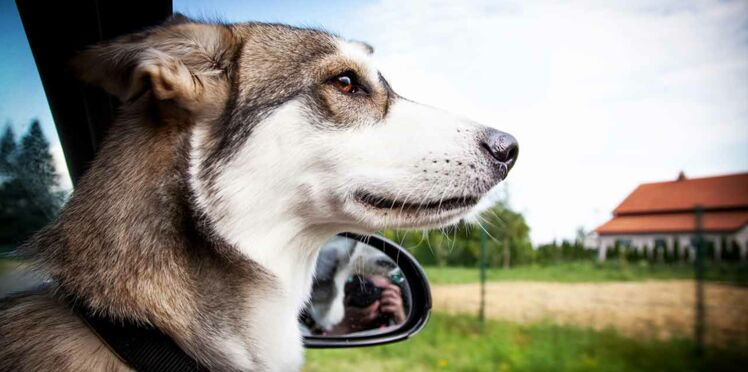 Vacances : des conseils pour bien gérer les transports avec son animal
