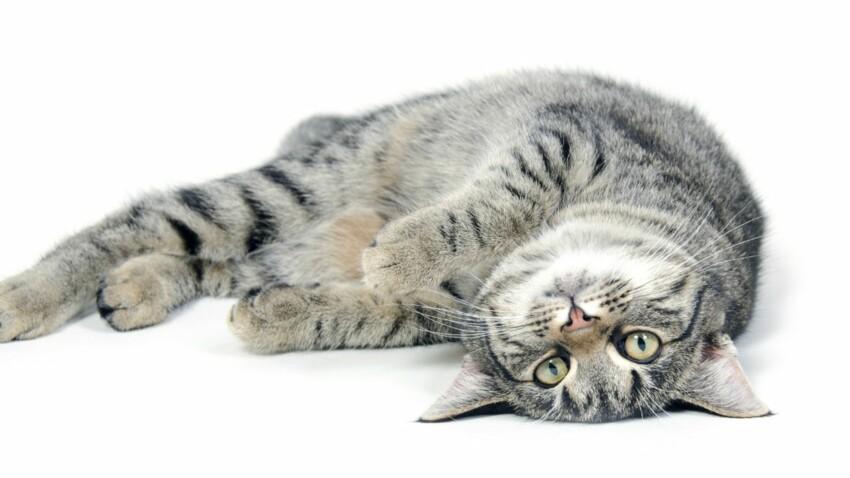 Vidéo : Feignant ce chat ? En voilà une idée !