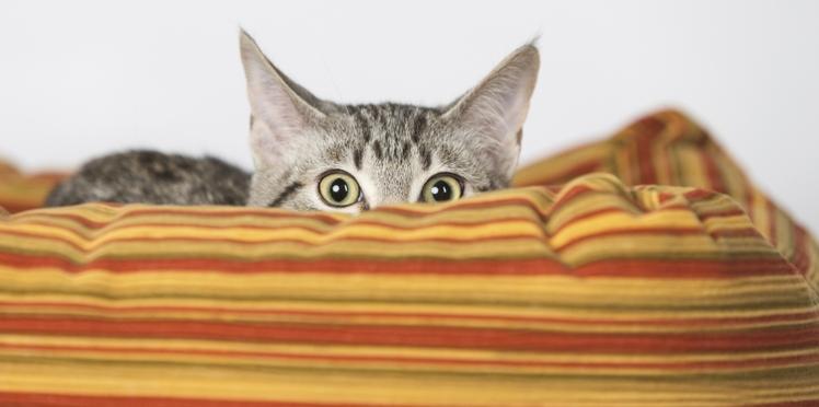 VIDEO : Idées d'habitats pour chats à réaliser soi-même !
