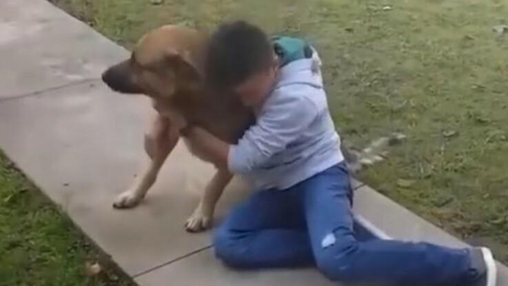 Vidéo- Un enfant pleure de joie en retrouvant son chien perdu depuis des mois