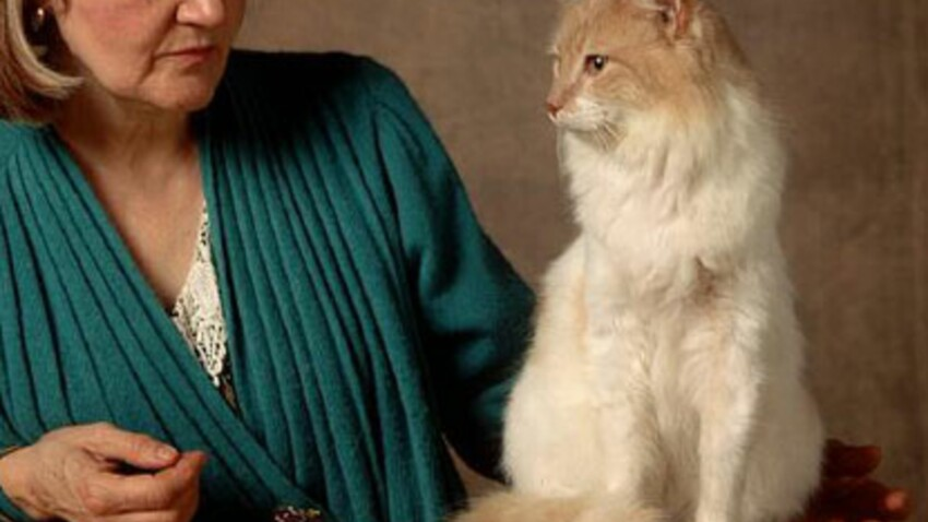 L'angora turc, un chat à l'élégance discrète