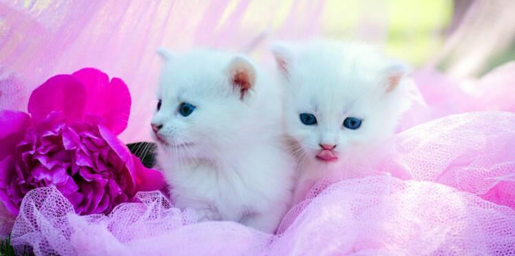 En 2017, les prénoms chiens et chats commencent par la lettre « N »