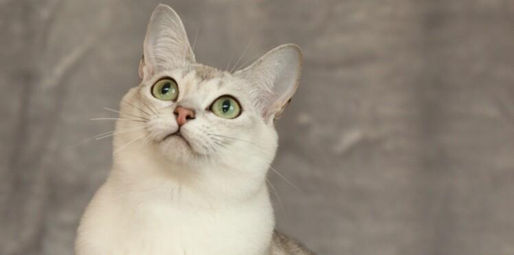 affectueux chatte chaud lesbiennes lécher chaque autres chatte
