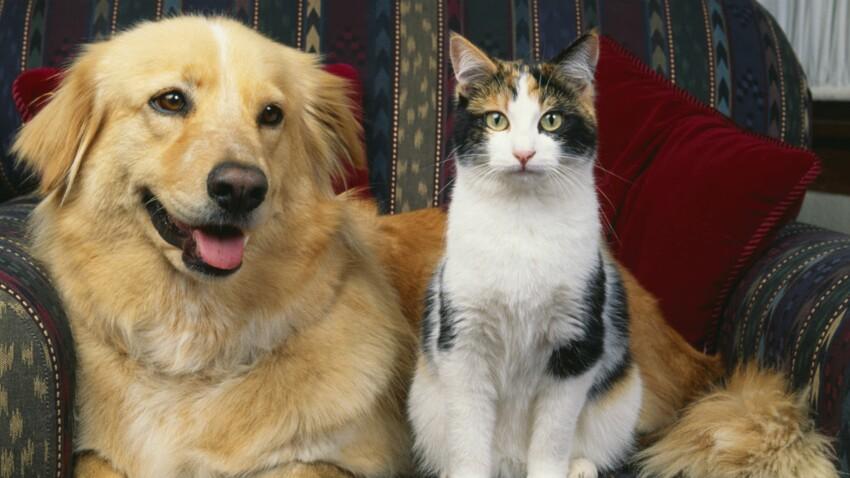 Les prénoms des chats et des chiens 2016 commencent par la lettre M