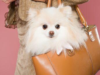 Je veux un chien tendance !