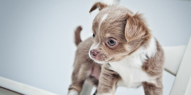 Les noms de chiens en J pour 2014