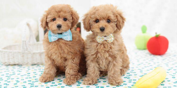 Les prénoms de chiens en L pour 2015