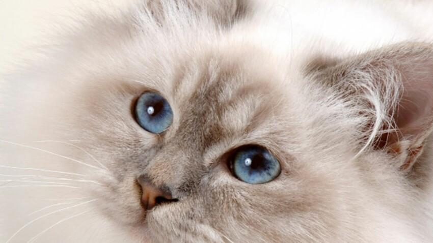 Nos plus belles photos de chats