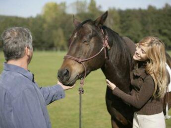 Murmurer aux oreilles des chevaux