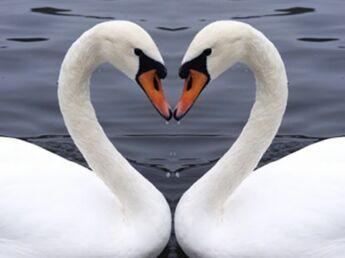 L'amour bête