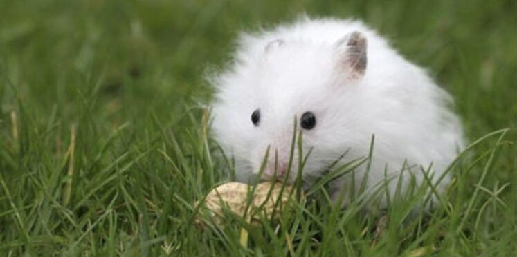 Bien élever son hamster