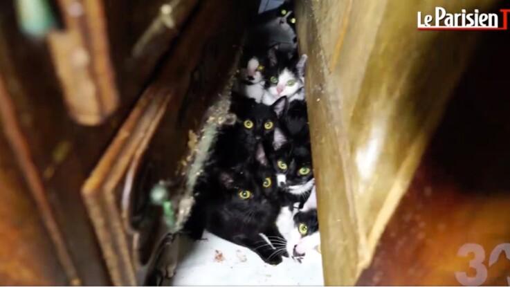 130 chats entassés dans 25 m2 : l'horrible découverte à Paris