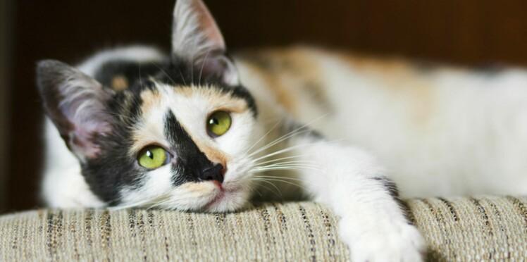 80 chats maltraités ou tués ont été découverts dans un squat