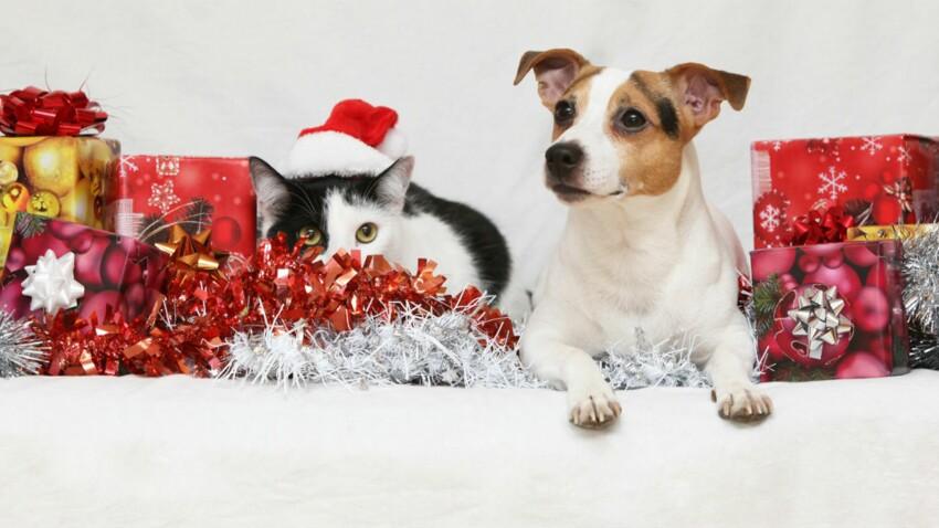 A Noël, nos animaux de compagnie seront gâtés !