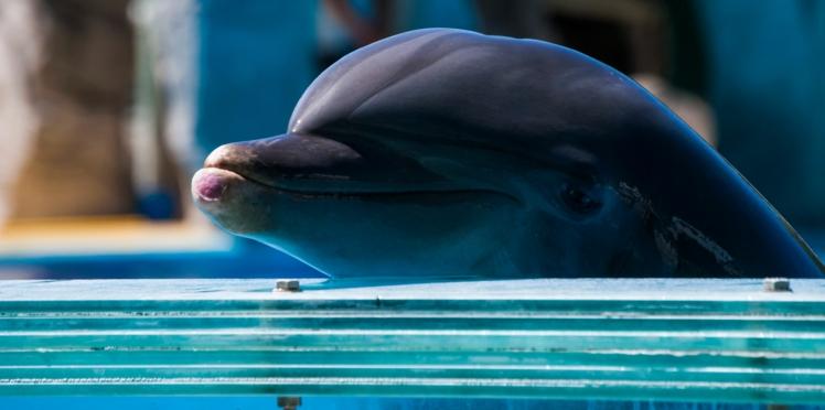 A quand la fin de la captivité des dauphins en France ?