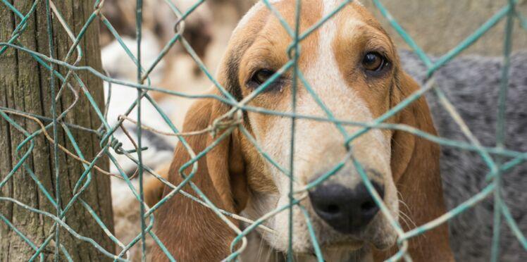 Les abandons d'animaux augmentent : mobilisons-nous avec la SPA !