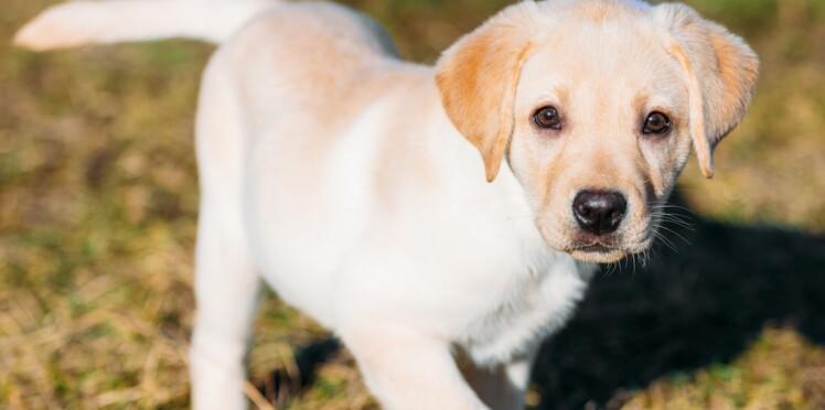 Adopte-moi : l'appli pour recueillir un animal de compagnie
