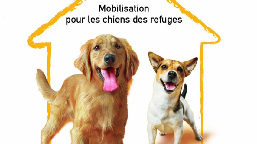 Adoptez les chiens des refuges