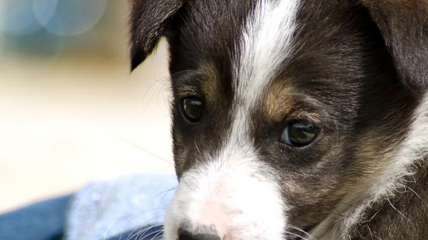 SPA : adoptez un chien ou un chat en vidéo !
