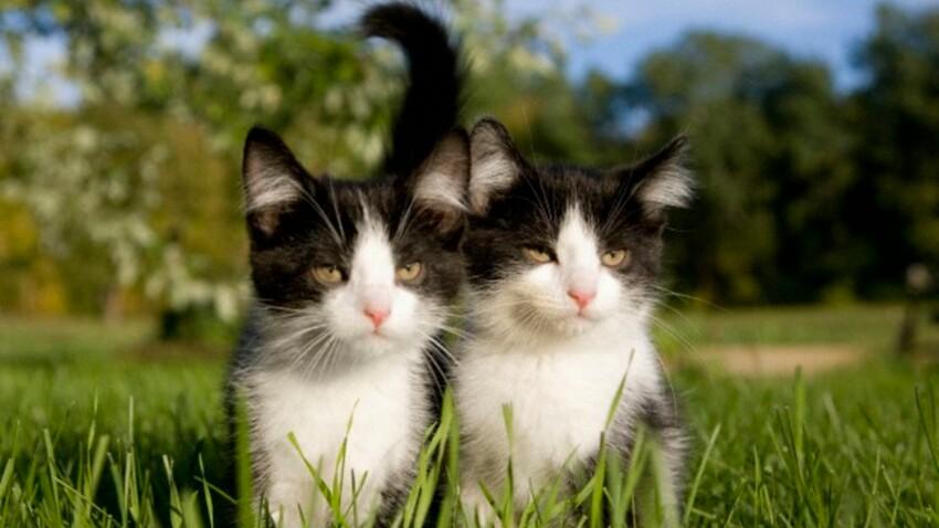 Sauvons les chats quiberonnais